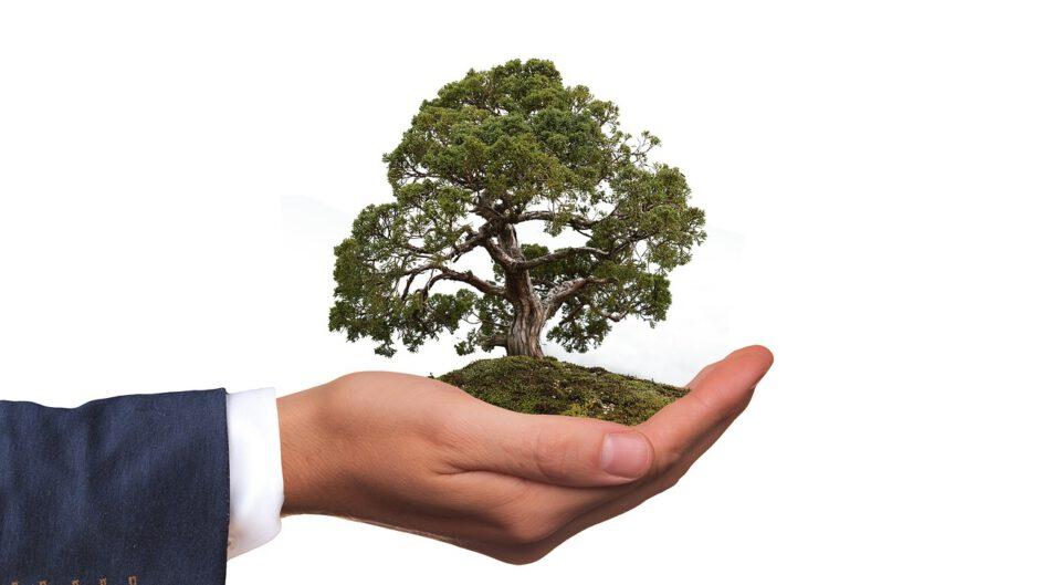 w dłoni małe drzewo