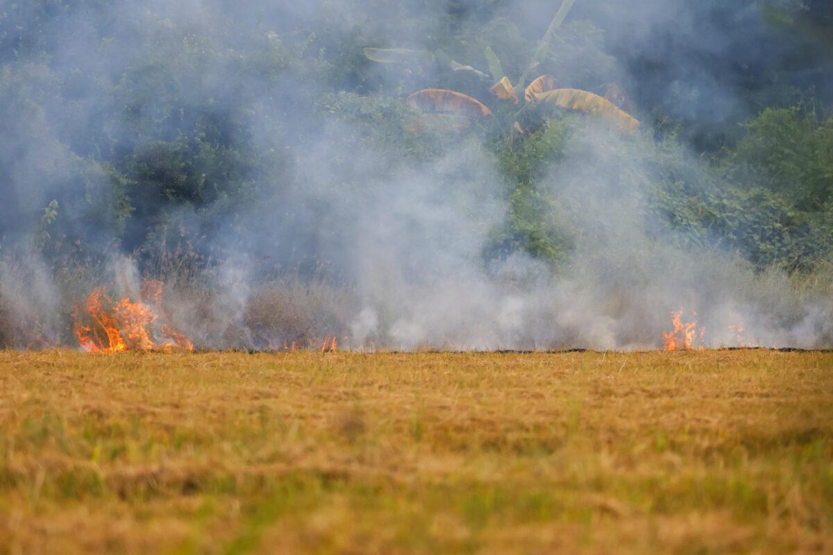 Zagrożenie ekologiczne w postaci efektu cieplarnianego doprowadzającego do pożarów